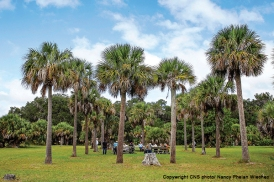 Palm trees outline the site of church at historic Santa Catalina